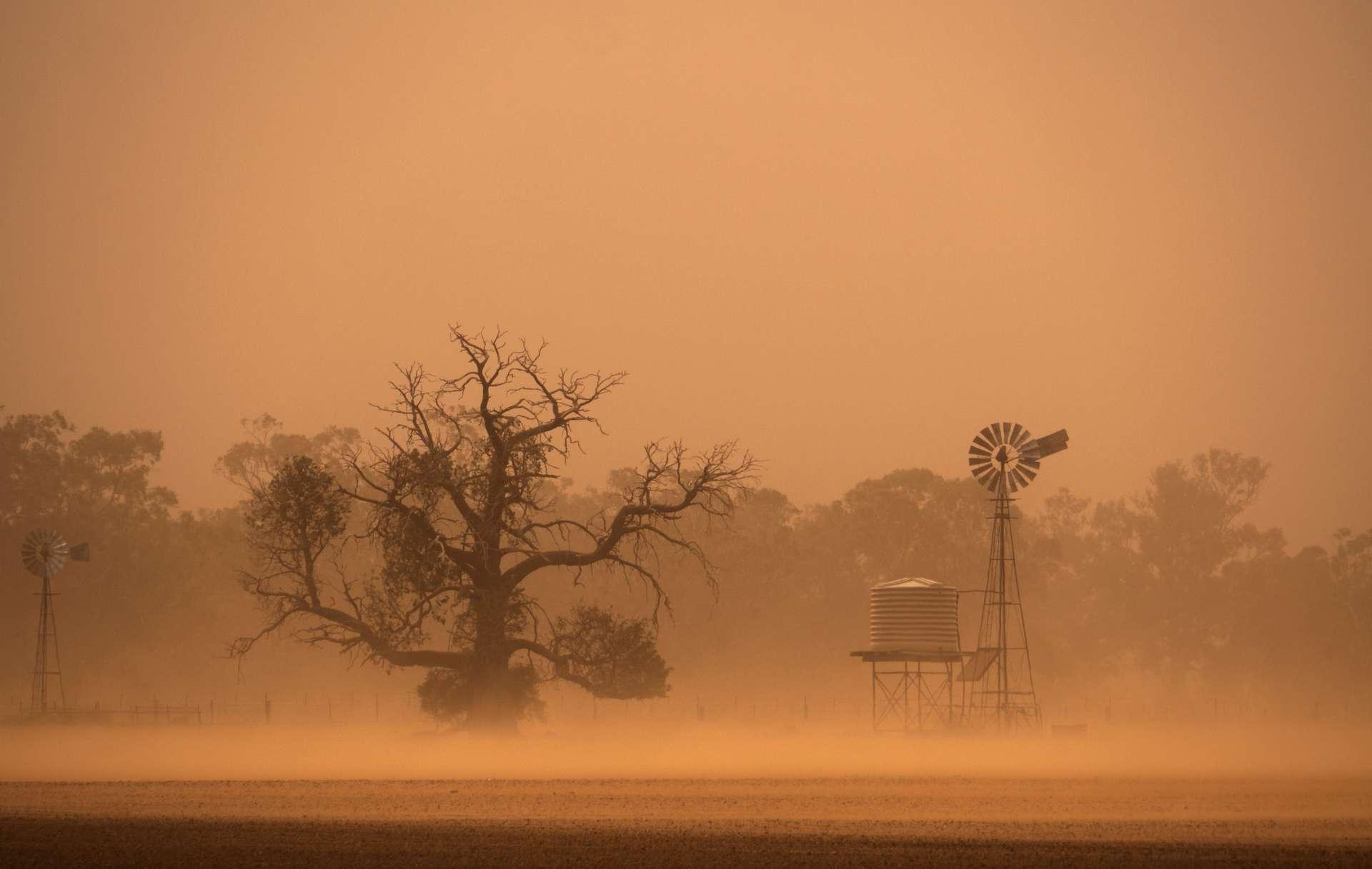 Ce week-end, l'Australie a été le théâtre de spectaculaires tempêtes de sable. © Chris Ison, Adobe Stock