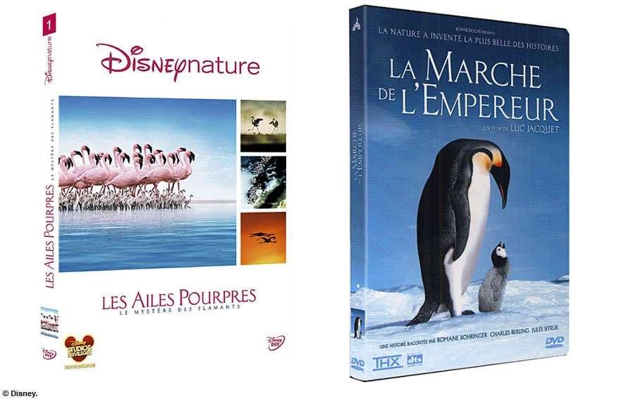 """Concours """"Pollen"""" : des places de cinéma et DVD à gagner. Crédits FS."""