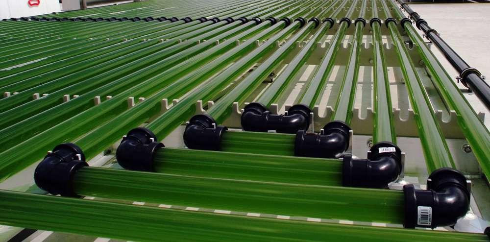 Des conduits transportent les algues unicellulaires. La culture de ces microalgues est bien au point et peut être largement automatisée. Elles ont besoin de nutriments, de CO2 et de lumière. Leur croissance peut être contrôlée par des capteurs mesurant différents paramètres, qui surveillent aussi la qualité de l'eau. © Ennesys