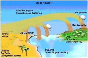 Le sable du désert est un puissant aérosol. Transporté par des vents forts (strong winds sur la carte), les particules peuvent se répandre sur les surfaces continentales ou dans les océans. Dans l'atmosphère, elles auront un effet radiatif (radiative impacts), pouvant contribuer autant au refroidissement qu'au réchauffement de l'atmosphère. Les aérosols peuvent perturber les cycles biogéochimiques terrestres et océaniques. © NCAR
