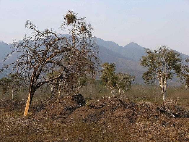 Une forêt tropicale sèche du Honduras. © Lon&Queta CC by-nc-sa 2.0