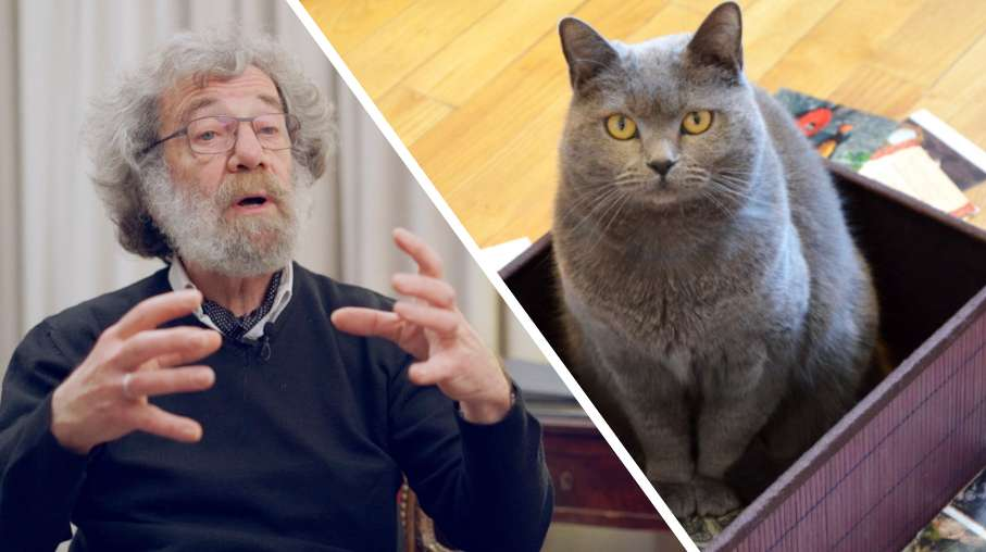 Interview : le paradoxe du chat de Schrödinger