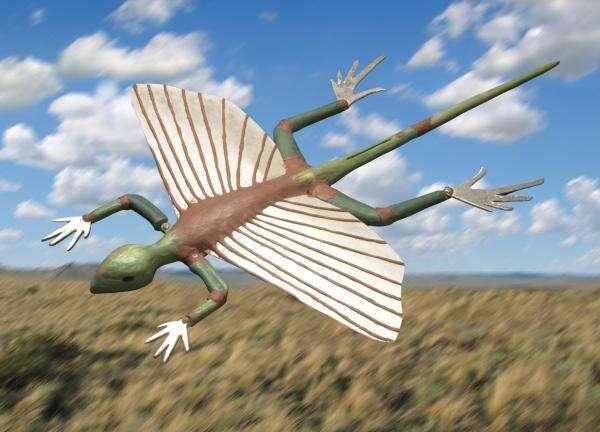Une reconsitution du kuehneosuchus. Crédit : Georg Olechinski
