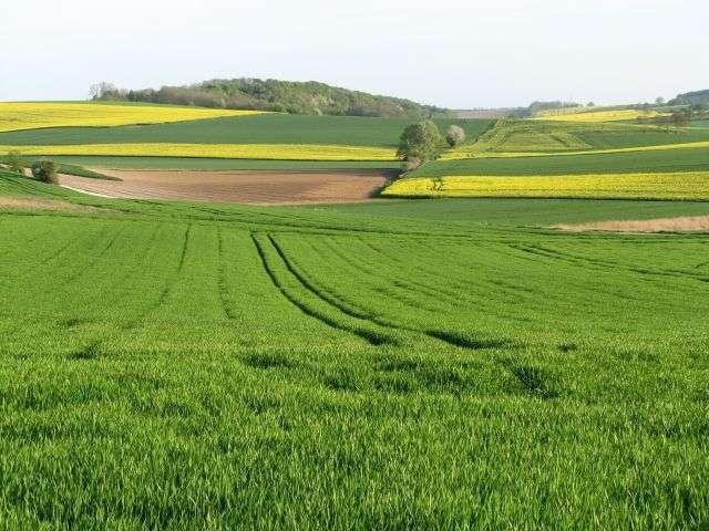 En 2009, environ 25.000 tonnes d'herbicides ont été utilisées en France, dont 90 % dans l'agriculture. © Buquet, shutterstock.com