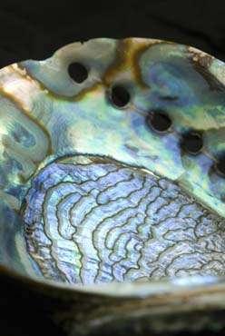 Le secret de la nacre résiderait dans sa fraction organique, représentant seulement 5 % du volume mais qui contraindrait la croissance des cristaux pour leur faire prendre différentes orientations. © Jeff Miller/ University of Wisconsin-Madison