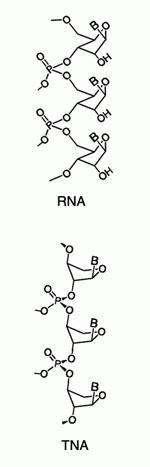 Représentation du squelette sucre-phosphate d'une molécule d'ARn et d'ATN.