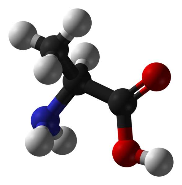 L'alanine est un acide aminé hydrophobe (carbone en noir, oxygène en rouge, azote en bleu et hydrogène en blanc). © Domaine public
