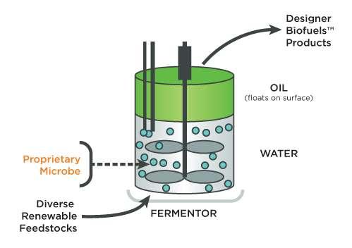 Une fois synthétisé, le biodiesel produit par les bactéries est libéré dans l'environnement aqueux et remonte vers la surface. Il ne reste plus qu'à l'aspirer. © LS9