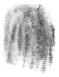 Une empreinte digitale. © Wikipédia by-sa 3.0