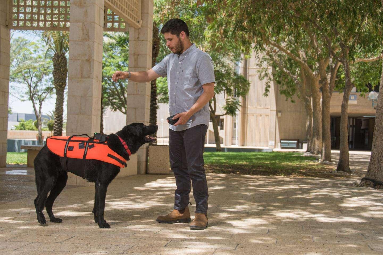 Cette veste éducative pour chien délivre des vibrations à la place des consignes orales. © Jonathan Atari