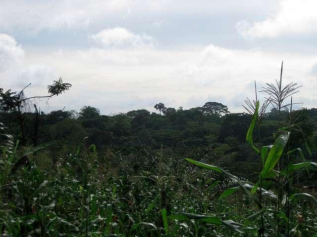 En Afrique, la forêt tropicale ou forêt du bassin du Congo, s'étend sur plus de 2 millions de kilomètres carrés. La déforestation menace ce genre de forêt. © Julie Dewilde, Flickr, cc by nc sa 2.0