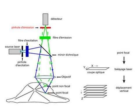 Schéma de principe du microscope confocal à balayage laser
