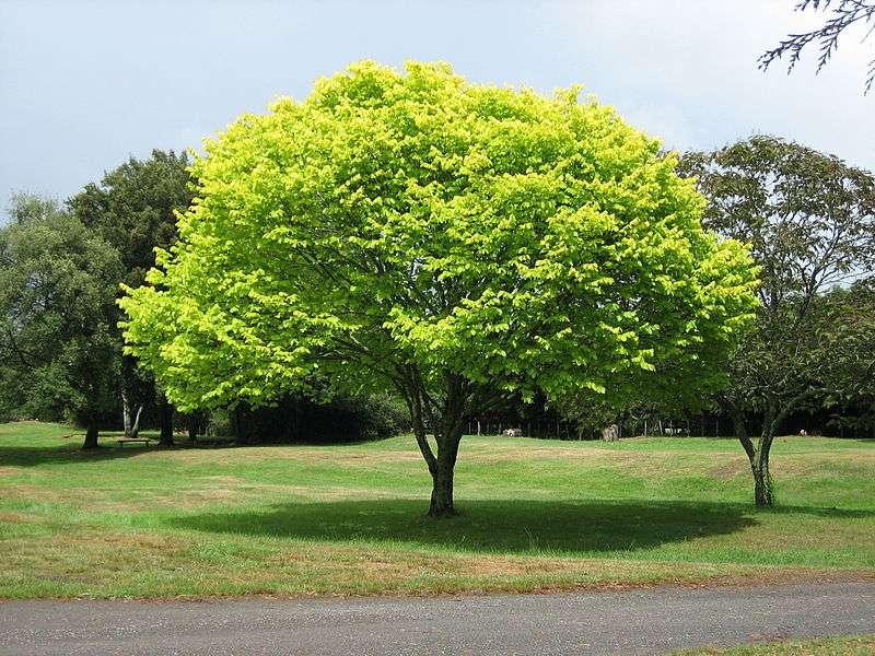 Les arbres, les plantes à fleurs, les graminées, les mousses ou encore les fougères sont des embryophytes, c'est-à-dire des plantes avec des racines, une tige et des feuilles. © Floyd Wilde, Wikipédia, cc by sa 2.0