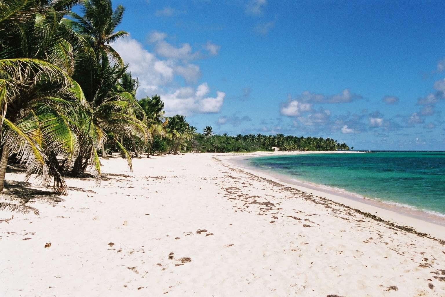 Avec leur climat tropical, les Antilles représentent un lieu privilégié pour le développement du moustique-tigre (Aedes aegypti), capable de transporter différents agents infectieux comme le virus de la dengue ou du chikungunya. Une épidémie de chikungunya sévit en ce moment sur ces îles. © Smiley, Flickr, cc by sa 3.0