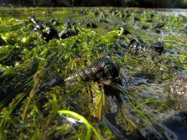 Des escargots sont capables de survivre dans le système digestif d'un oiseau et ont sans doute survolé le Mexique grâce à ce moyen de locomotion. © stonebird, Flickr, cc by nc sa 2.0