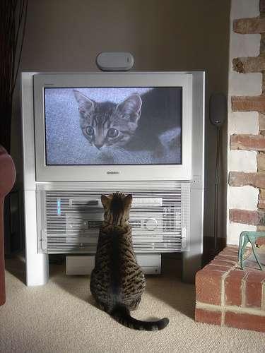 Seule l'électricité permet à ce chat d'observer sa propre image à la TV. © Cloudzilla CC by 2.0