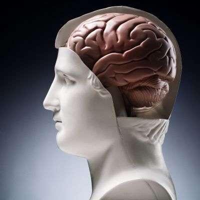 La reprogrammation de cellules en neurones permettra-t-elle enfin de soigner la schizophrénie ? © Milos Luzanin/shutterstock.com