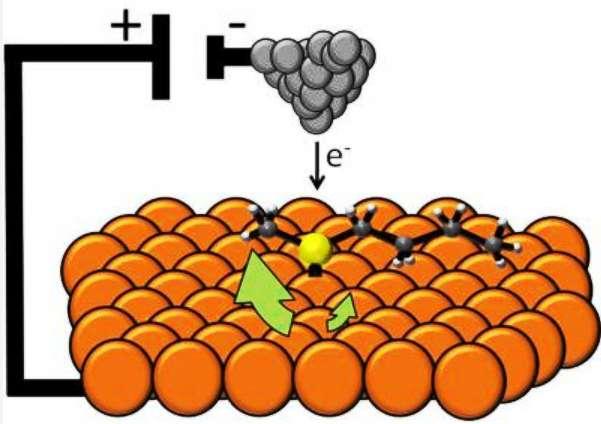 Schéma montrant la molécule sulfurée (l'atome de soufre est en jaune) avec ses deux radicaux carbonés de part et d'autre, sur une surface de cuivre (atomes orange), pilotée par la pointe d'un microscope à effet tunnel (atomes gris). © Nature Nanotechnology-Sykes Laboratory
