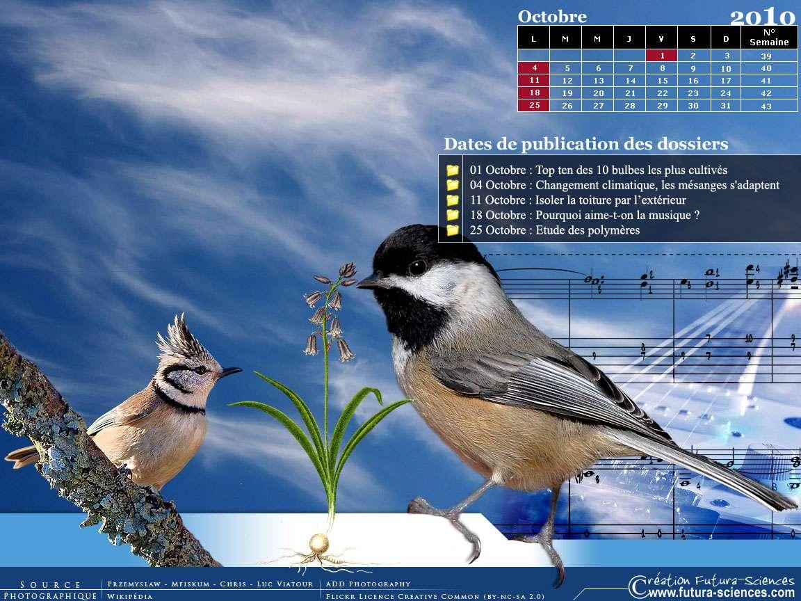 Musique, isolation, mésanges et polymères : téléchargez votre calendrier. Crédits FS.
