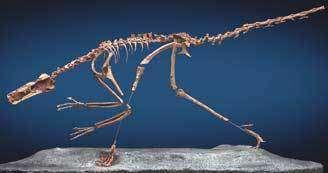 Bruitreraptor gonzalezorum