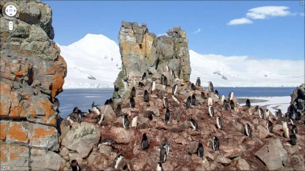 Des manchots filmés à leur insu par le service Google Streetview, quelque part dans les Shetland du Sud. © Google