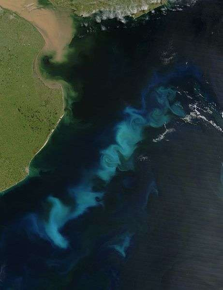 Le phytoplancton peut s'observer par satellite, comme sur cette photo de la côte Argentine prise par le satellite Aqua de la NASA à l'aide du spectroradiomètre MODIS (Moderate Resolution Imaging Spectroradiometer). Crédits DR.