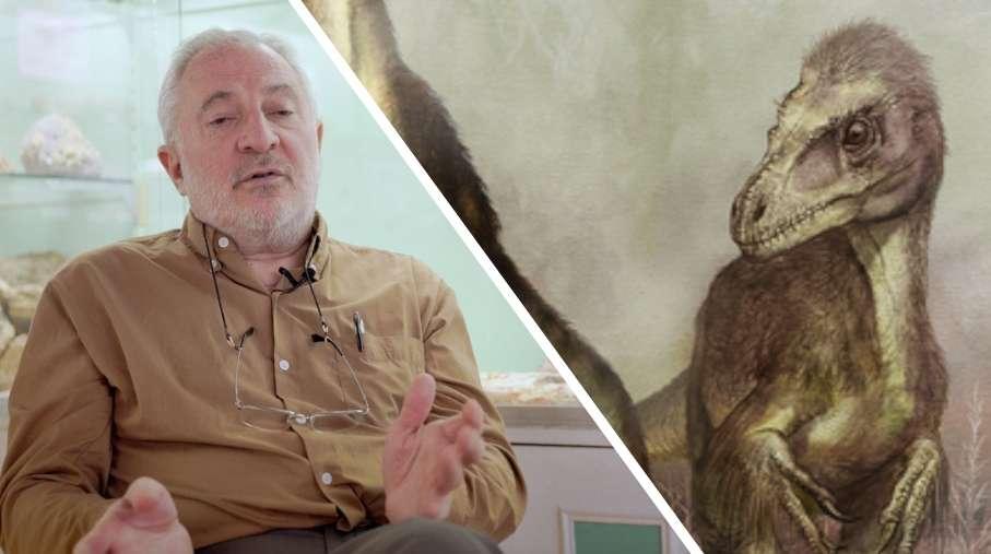 Interview : les oiseaux sont-ils les derniers descendants des dinosaures ?