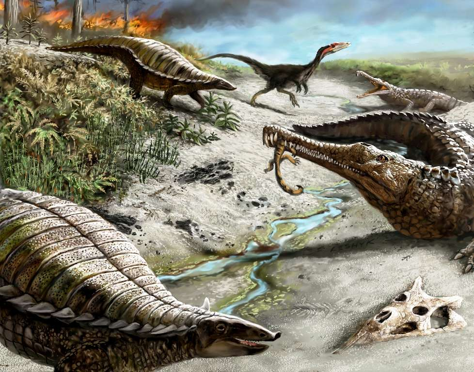 Il y a 212 millions d'années, dans ce qui est aujourd'hui le nord du Nouveau-Mexique, le paysage était sec, le climat chaud avec des feux de forêt fréquents. Les premiers dinosaures, comme le dinosaure carnivore en arrière-plan, un Coelophysis, étaient petits et rares. Des reptiles tels que les phytosaures à long museau et les aétosaures blindés étaient en revanche tout à fait communs. © Victor Leshyk