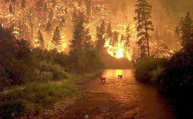 Les catastrophes naturelles qui attaquent les forêts boréales n'ont pas d'impact négatif sur le réchauffement climatique. © catherinetodd2, Flickr, cc by nc 2.0
