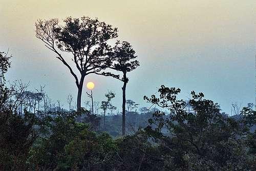 Une forêt de République centrafricaine, à Bayanga. Quand la teneur atmosphérique en gaz carbonique augmente, ses arbres, obligeamment, transforment ce gaz à effet de serre en bois. © Richard Franco / Flickr - Licence Creative Common (by-nc-sa 2.0)