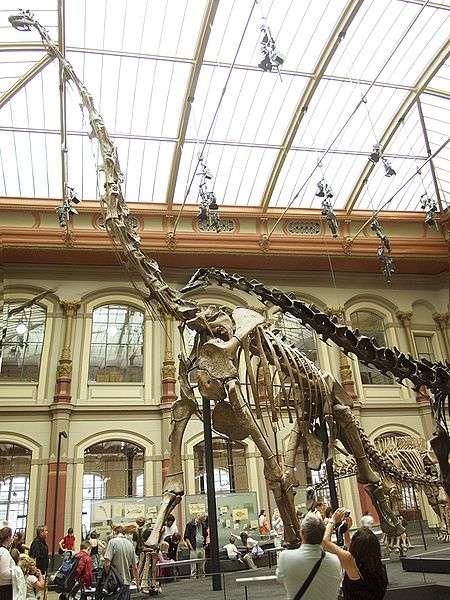 Squelette composite d'un Giraffatitan, l'un des plus grands organismes terrestres à avoir vécu. © Raimond Spekking, Wikimédia Commons CC by-sa 3.0 & GFDL