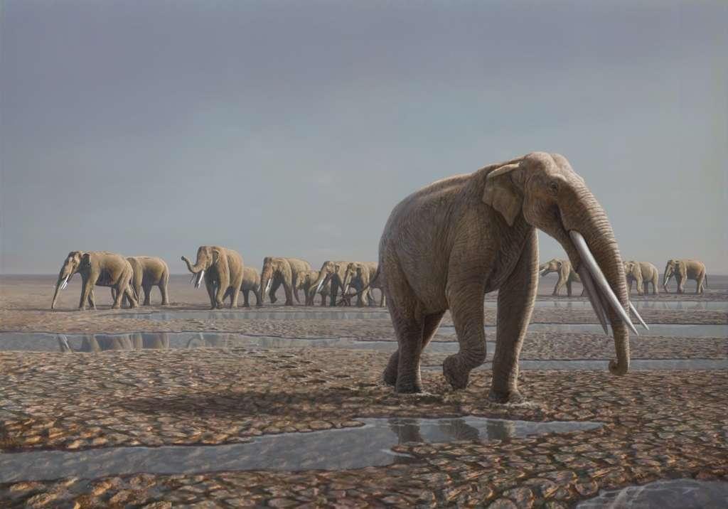 Reconstitution du troupeau d'éléphants ayant fréquenté le site de Mleisa 1 dans le désert d'Abu Dhabi, d'après les empreintes fossilisées laissées au sol. L'espèce a été choisie arbitrairement, elle correspond à Stegotretrabelodon. © Mauricio Antón