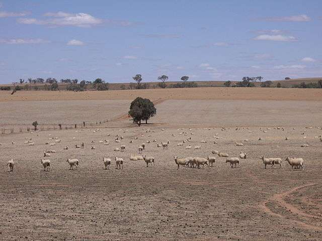 Le réchauffement climatique serait à l'origine de l'accentuation des sécheresses dans les régions subtropicales. L'Australie est notamment concernée. En 2007, la région de Riverina, en Nouvelle-Galles du Sud, avaient ainsi souffert du manque d'eau. © Virtual Steve, Wikimedia Commons, CC by-sa 3.0