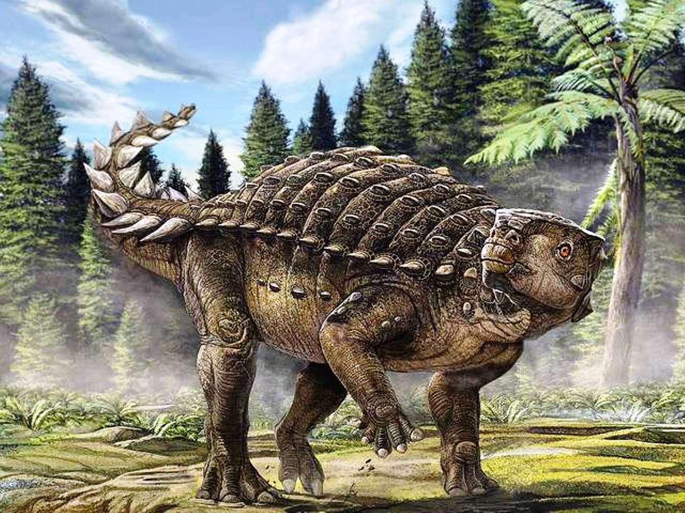 Reconstitution d'artiste du nouveau dinosaure australien Kunbarrasaurus ieversi. © Australian Geographic (image utilisable seulement pour un texte en relation avec cette découverte)