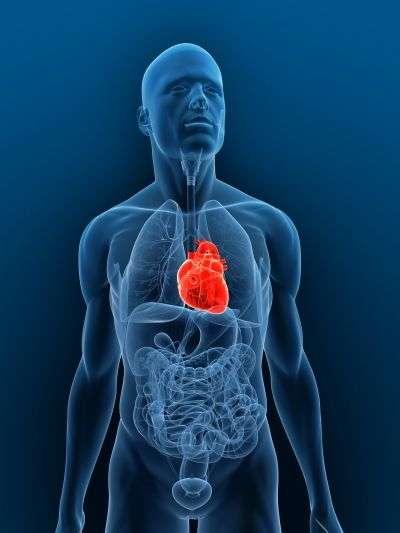 Le manque d'oxygène, responsable des séquelles au niveau des organes vitaux, peut être contourné grâce à l'hypothermie thérapeutique. © shutterstock/Sebastian Kaulitzki/shutterstock.com