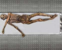 La momie d'Ötzi, aussi appelé l'Homme de glace tyrolien, est conservée dans une chambre réfrigérée spéciale au musée de Bozen-Bolzano en Italie. © Keller et al. 2012, Nature Communication