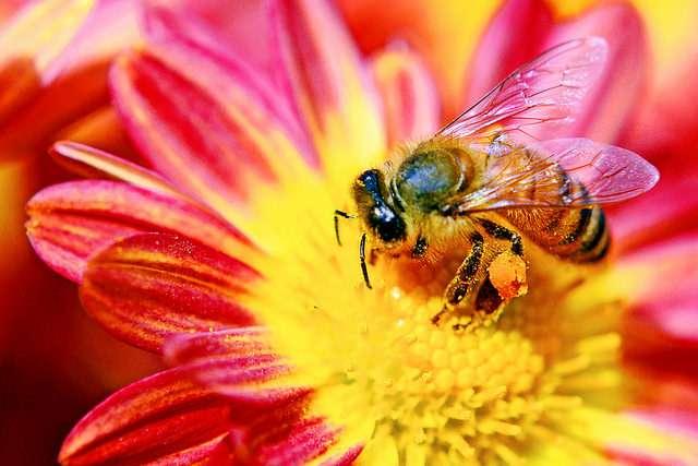 Service écologique gratuit, la pollinisation s'appuie sur de nombreux insectes mais utilise aussi des animaux et le vent. © DR