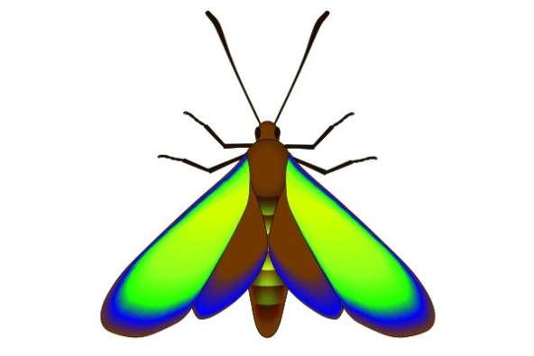 Un papillon fossilisé vieux de 47 millions d'années a retrouvé ses couleurs. © McNamara et al., 2011 - PLoS Biology