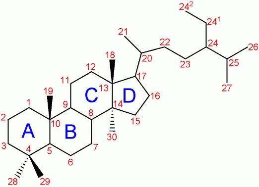 Une molécule stéroïde se compose toujours de trois cycles hexagonaux (A, B et C) et d'un cycle hexagonal (D). © Shaddack, Wikipédia, DP