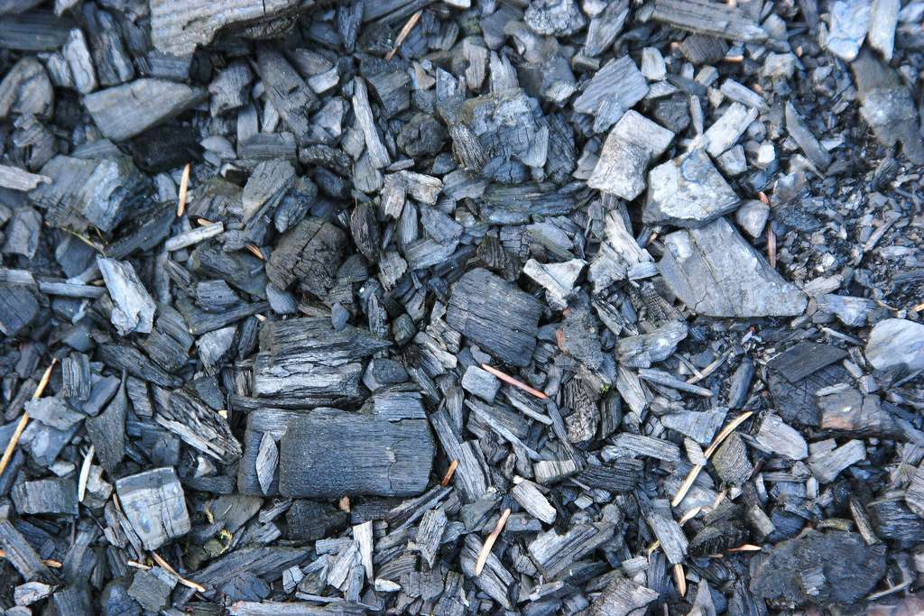 La plupart des gisements de charbon exploités par l'Homme se sont formés à la suite de la carbonisation d'importantes quantités de débris végétaux qui ont été enfouis dans des bassins côtiers ou lacustres du Carbonifère, voici 299 à 359 millions d'années. © www.MathildaLefort.fr, Flickr, cc by 2.0