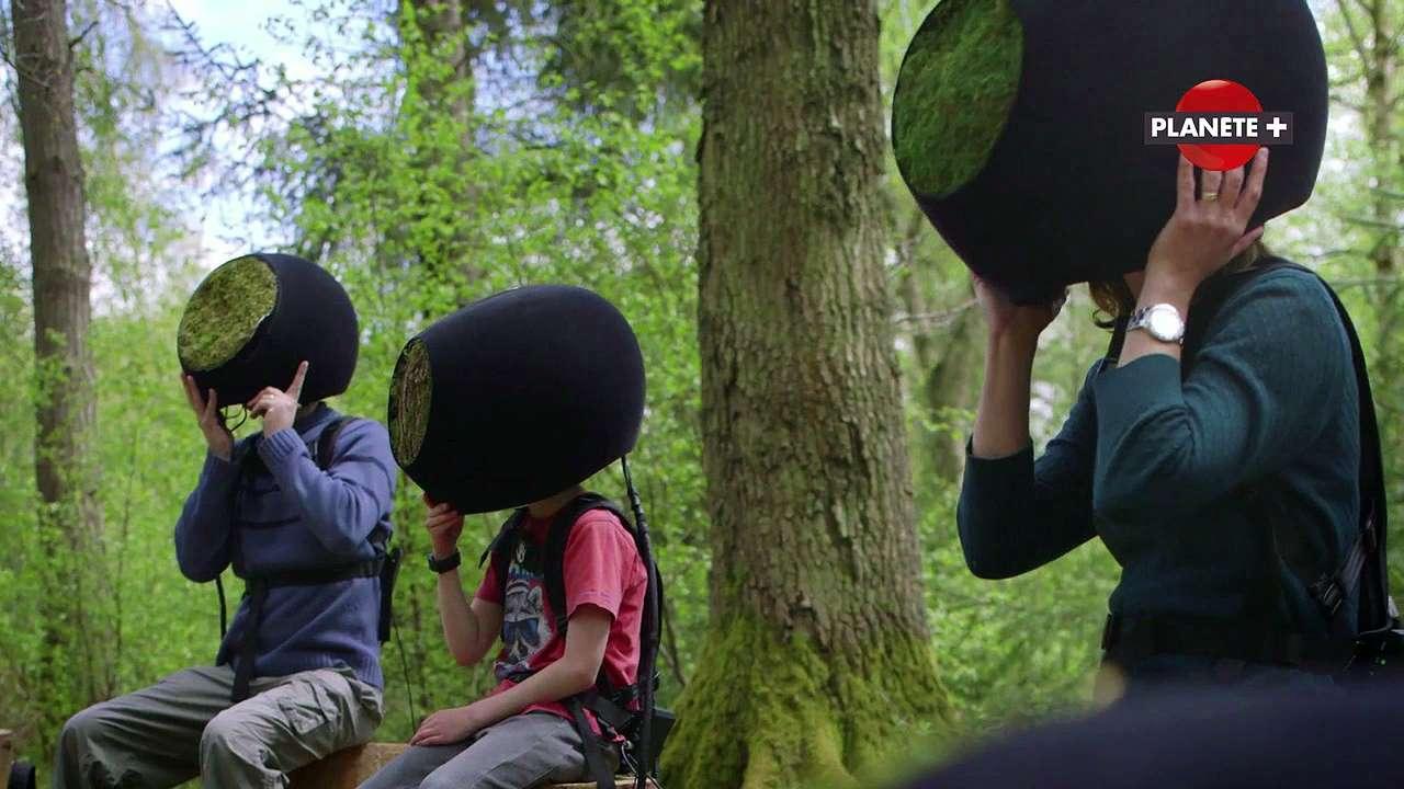 En 2050, comment voir la forêt avec les yeux d'un animal