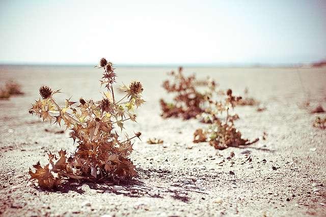 La sécheresse de juillet 2011 dans la Corne de l'Afrique a causé près de 30.000 morts en Somalie. © MyNameHere, Flickr, cc by nc nd 2.0