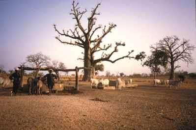 Image du Sahel