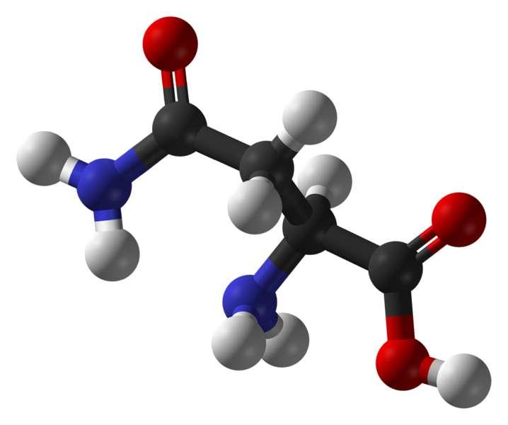L'asparagine est un acide aminé polaire (carbone en noir, oxygène en rouge, azote en bleu et hydrogène en blanc). © Ben Mills, domaine public