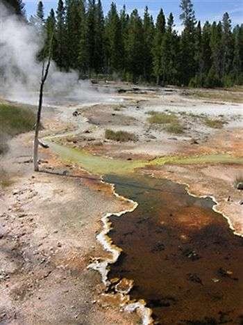 Source chaude (ici à 78°C) dans le parc de Yellowstone. Crédit image inconnu.