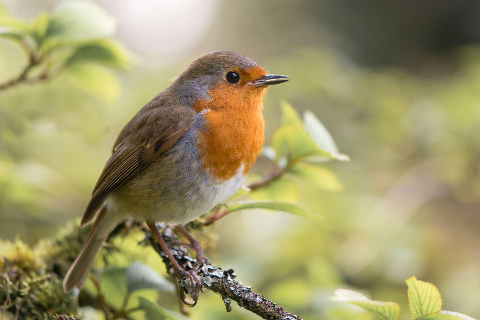 En France, 578 espèces d'oiseaux ont été répertoriées. © Iredding01, Adobe Stock