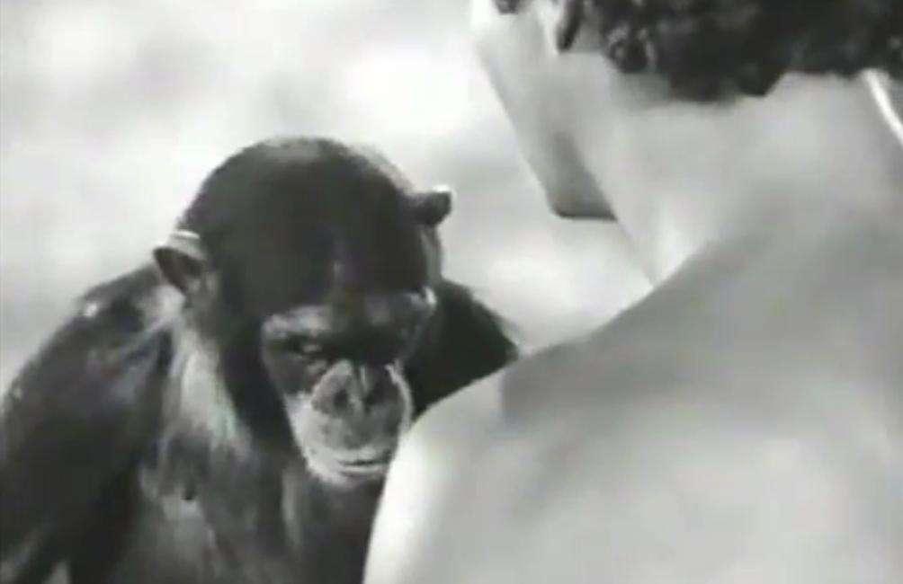 Le singe qui vient de mourir serait celui qu'on a pu voir à l'écran en 1934. Johnny Weissmuller, ici de dos, dans le rôle de Tarzan est mort en 1984, soit 27 ans avant son partenaire de jeu. Drôle de hasard : il avait lui aussi 79 ans. © Kewenego, YouTube
