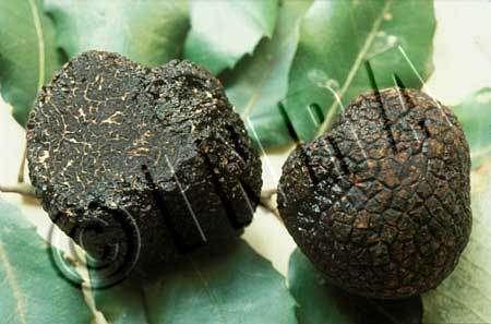 La truffe : de plus en plus rare et chère, gare aux fraudes !