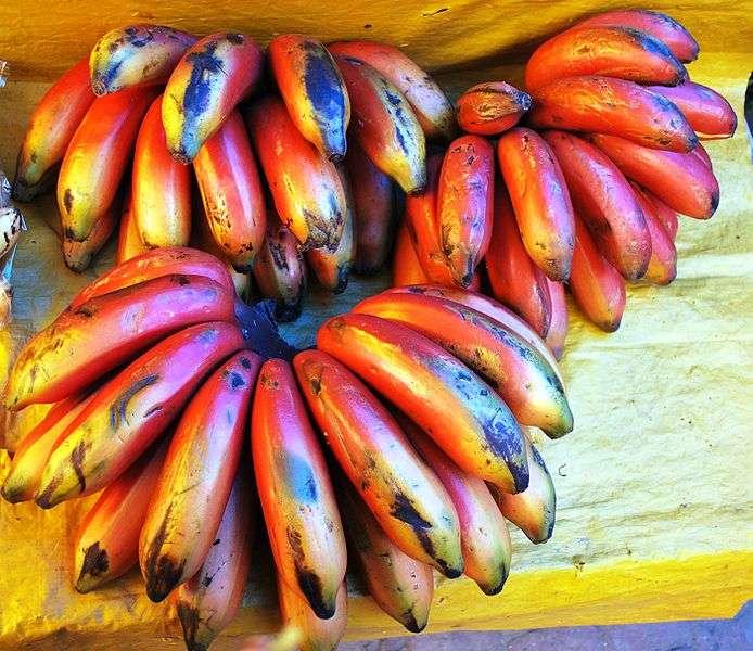 Le chlordécone était répandu sur les bananes qui, par la même occasion, s'imprégnaient du pesticide et devenaient impropres à la consommation car dangereuses. © Thermadatter, Wikipédia, cc by sa 3.0