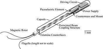 Schéma de principe d'un nanorobot équipé d'un moteur Proteus et de deux flagelles pour la propulsion. © J. Friends